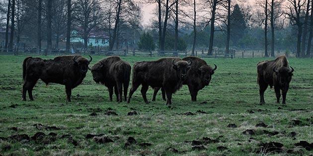 WWF-Polen05