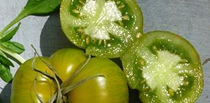 Grüntöne - urbanes gärtnern