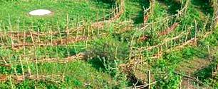 Das Weidenlabyrinth