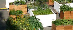 Urbanes Gärtnern in Frankfurt's Osten
